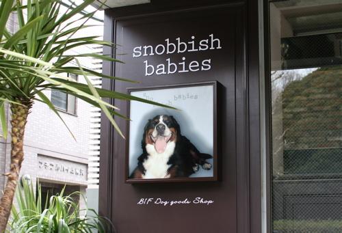 Snobbish_babies