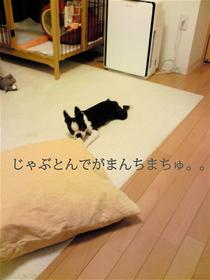 Photo_222